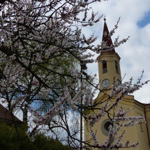Pohled na Petrovice jaro